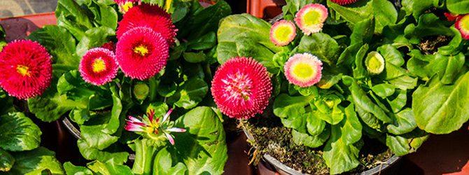 Sie bestellen, wir machen − Pflanzen für Ihren Garten