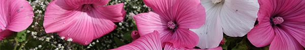 Ab Samstag, 11. März wieder da: Floristin Ulrike Neu