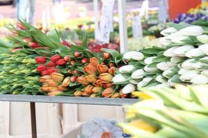 Farbenpracht: Tulpen läuten den Frühling ein.