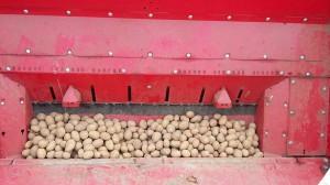 Mausbeck_Kartoffelpflanzung_5