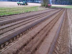 Mausbeck_Kartoffelpflanzung_9